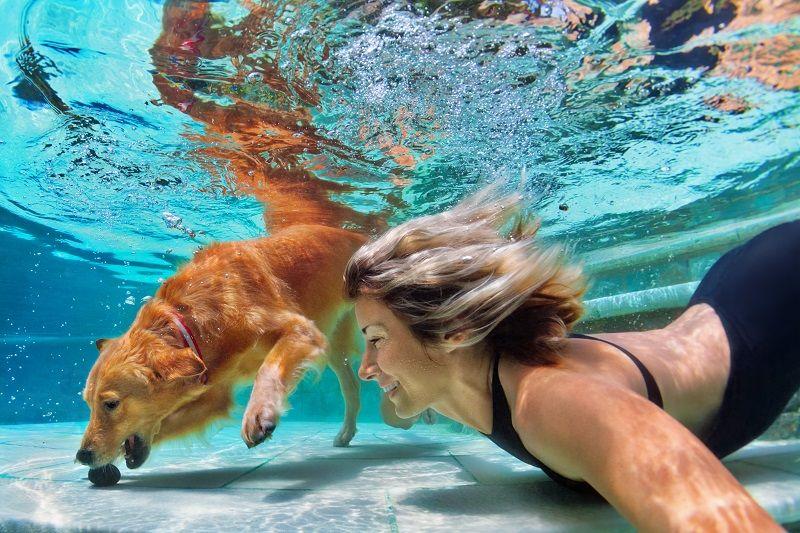 Bazén a jeho provoz