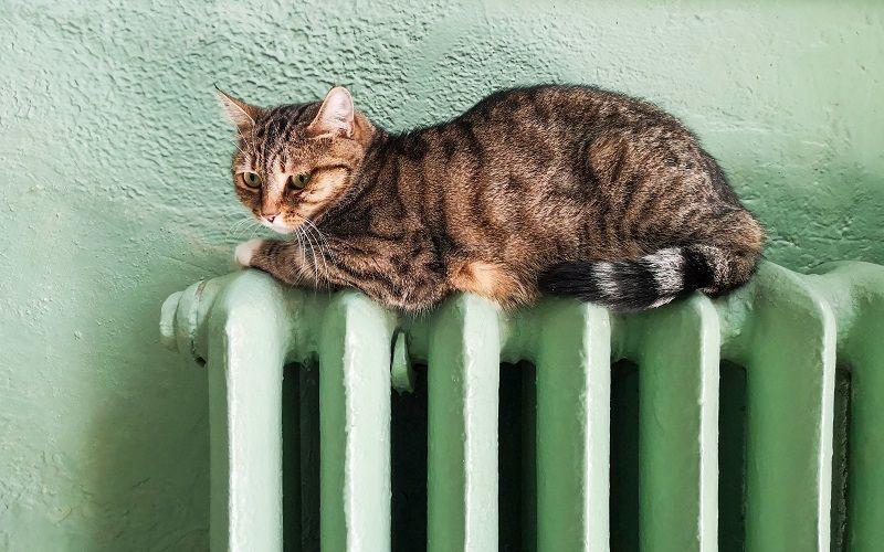 Kočka na topení